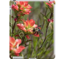 Bumble Bee on bright pink Indian Paintbrush flowers iPad Case/Skin