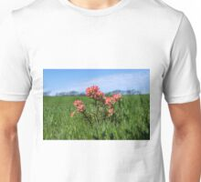 Beautiful Indian Paintbrush flowers closeup Unisex T-Shirt