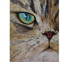 Persian Cat Photographic Print