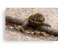 I Think I See Something To Eat! Canvas Print