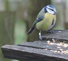 Blue Tit Steps by CreativeEm