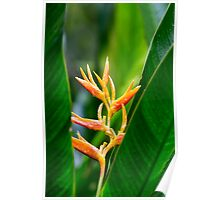 Tropical Heliconia Floral Photography Poster