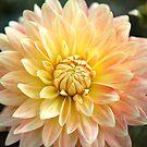 Yellow Perfection by Lynn Starner