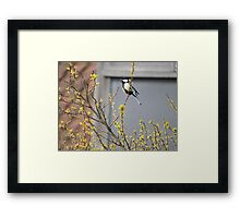 Song of The Great Tit Framed Print