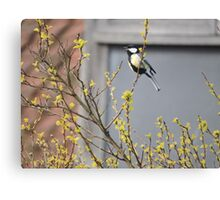 Song of The Great Tit Canvas Print