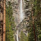 Upper and Lower Yosemite Falls, California, USA by TonyCrehan