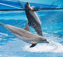 Dolphins in Ocean Park Hong Kong by Keith Larby