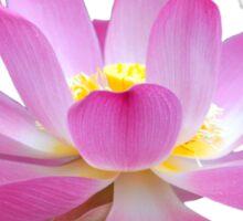 Open Lotus Flower Bud Sticker