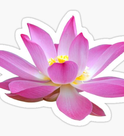 Open Lotus Flower Bud Sticker