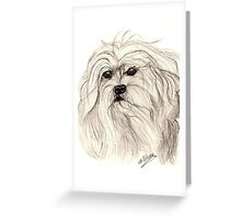 Lowchen in pencil  Greeting Card