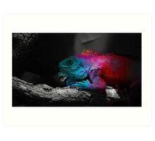 Iguana colors Art Print