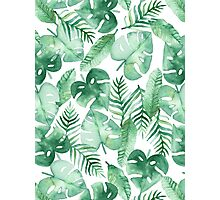 Tropical Jungle on White Photographic Print