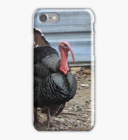 Domesticated Turkey iPhone Case/Skin