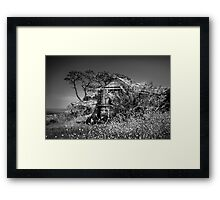 Port Arlington House Framed Print