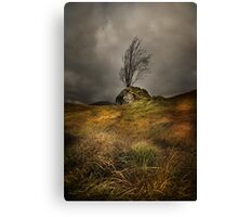 Surviving the elements Canvas Print