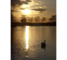 Swan in the sunset at Pontefract Park Photographic Print