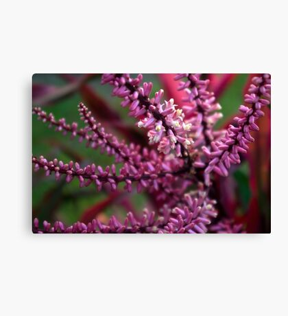 Pink and Cream Clusters Canvas Print