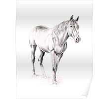 Standing Racehorse Poster