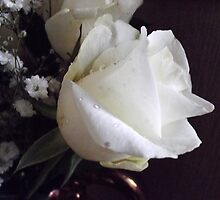 White  Rose by Joyce Knorz