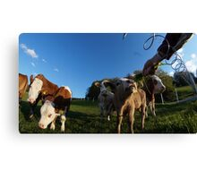 calf in 2 Canvas Print