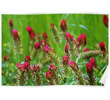 Raspberry Colored Flowers Poster