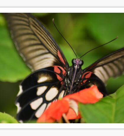 Cheeky butterfly Sticker