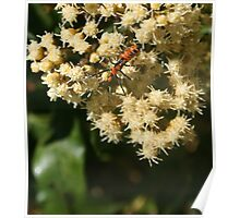 Orange and Black Insect on a Flower Poster