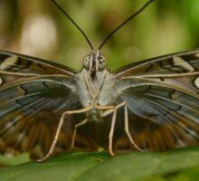 Butterfly from beneath  Sticker