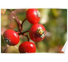 Red wild berry and ladybug. Poster
