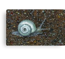 Morning Snail After the Rain Canvas Print