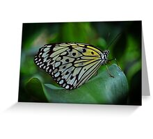 Black or White Greeting Card