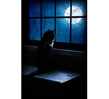 Black Minnaloushe watches the Moon Photographic Print