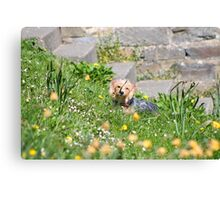 Puppy in wildflowers Canvas Print