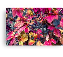 Wild grapes (pink) Canvas Print