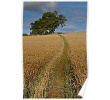 Path Through a Wheat Field Poster