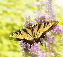 Butterfly - Swallowtail - Hard to swallow by Mike  Savad