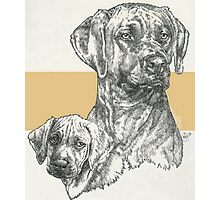 Rhodesian Ridgeback Father & Son Photographic Print