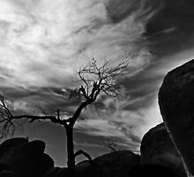 The Rocks and the Tree... by Angelika  Vogel