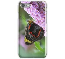 Common (Black) Jezebel, Delias nigrina iPhone Case/Skin