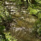 Woodland stream by KMorral