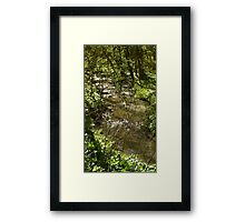 Woodland stream Framed Print