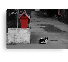 Cat Mail Canvas Print
