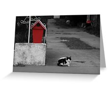 Cat Mail Greeting Card