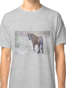 Young Male Tiger on The Prowl Classic T-Shirt