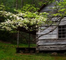 Rustic Cabin and Dogwood Tree by KellyHeaton