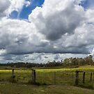 Green Pastures by JLOPhotography
