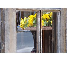 Reflecting Spring Photographic Print