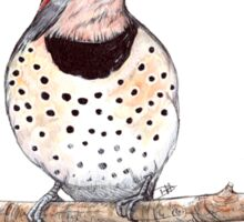 Northern Flicker Sticker