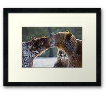 Bears at play Framed Print