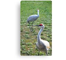 Sandhill Lookup Canvas Print